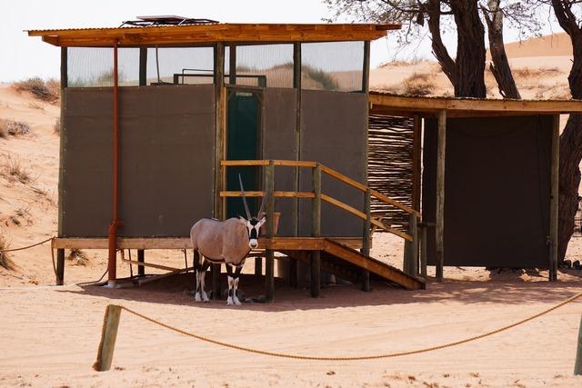 Orxy Antilopen im NamibRand Nature Reserve - Camp Site