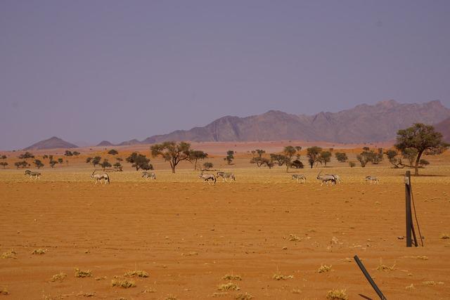 Orxy Antilopen im NamibRand Nature Reserve