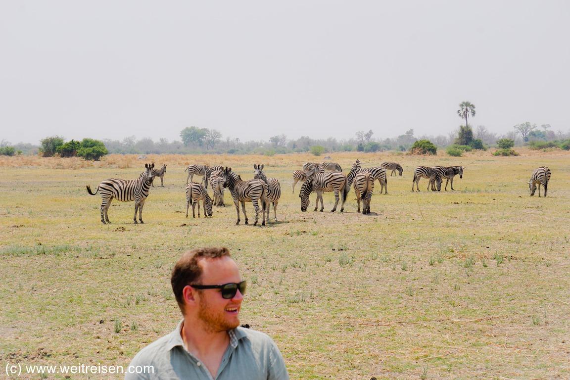 Moremi Game Reserve - Zebras