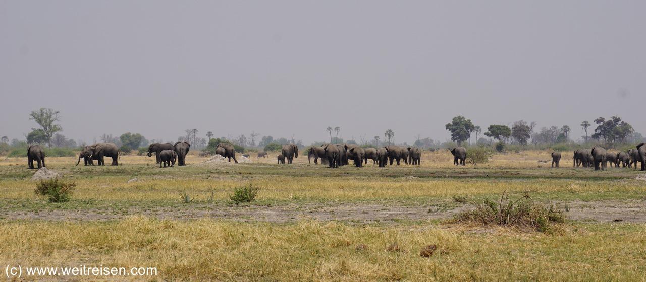 Moremi Game Reserve - Elefantenherde