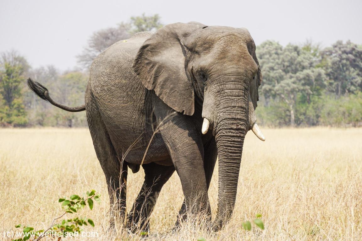 Elefanten im Chobe National Park