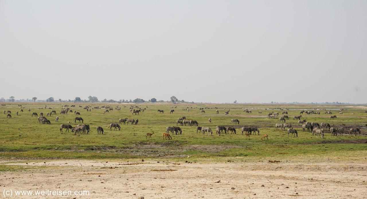 Chobe Riverfront, Tierwelt