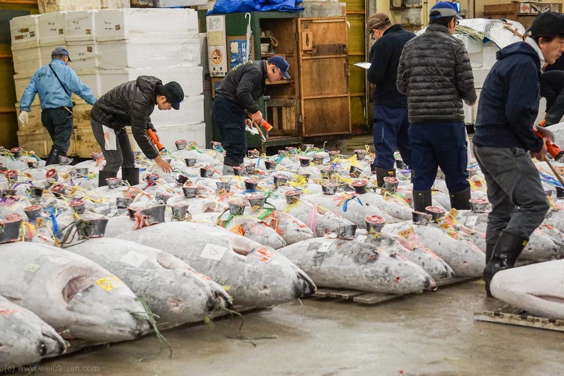 Thunfisch Auktion Tokio Fischmarkt,