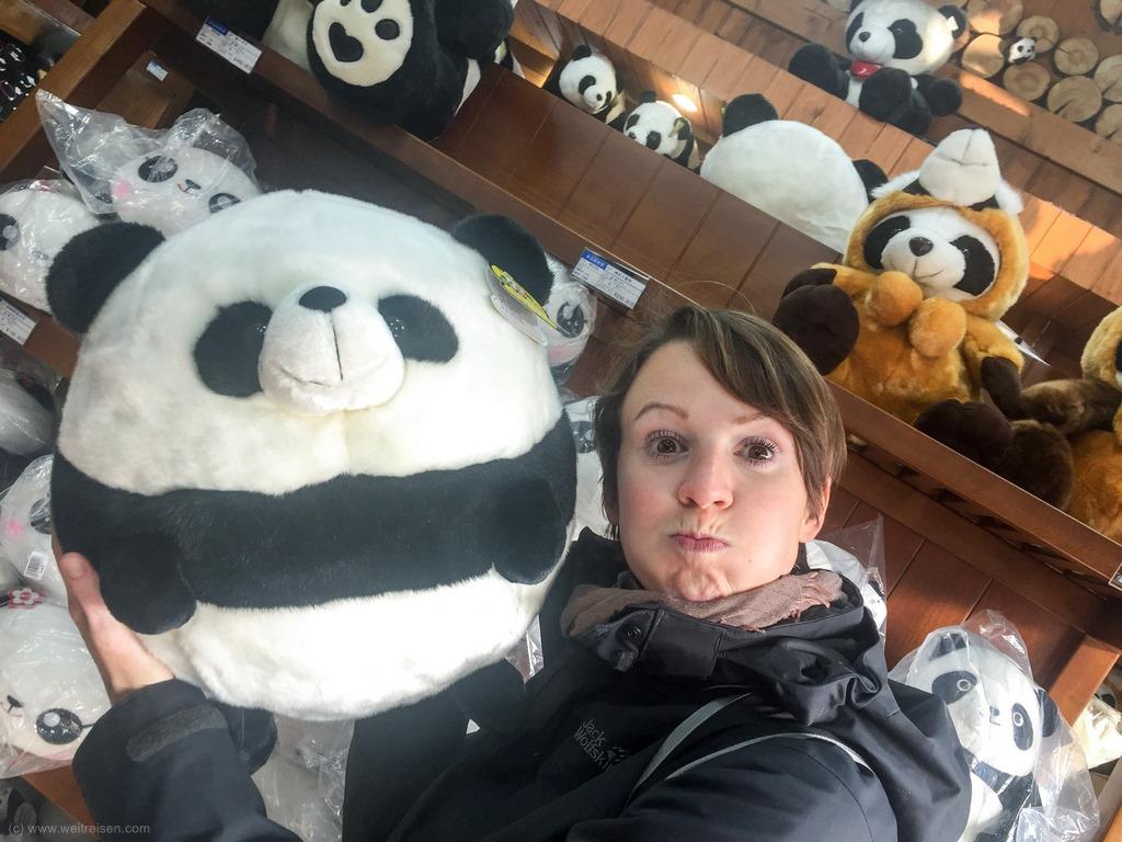 Panda Bären, Chengdu