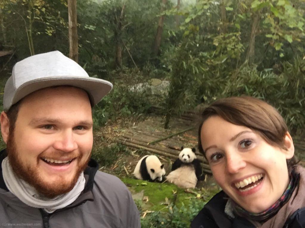 Pandabären, Panda, Chengdu