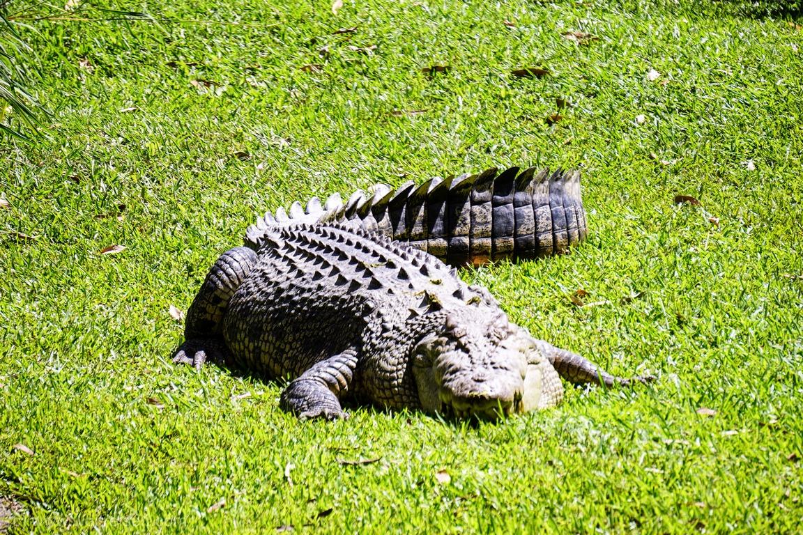 Australia Zoo, Home of the Crocodile Hunter, Steve Irwin, Crocoseum